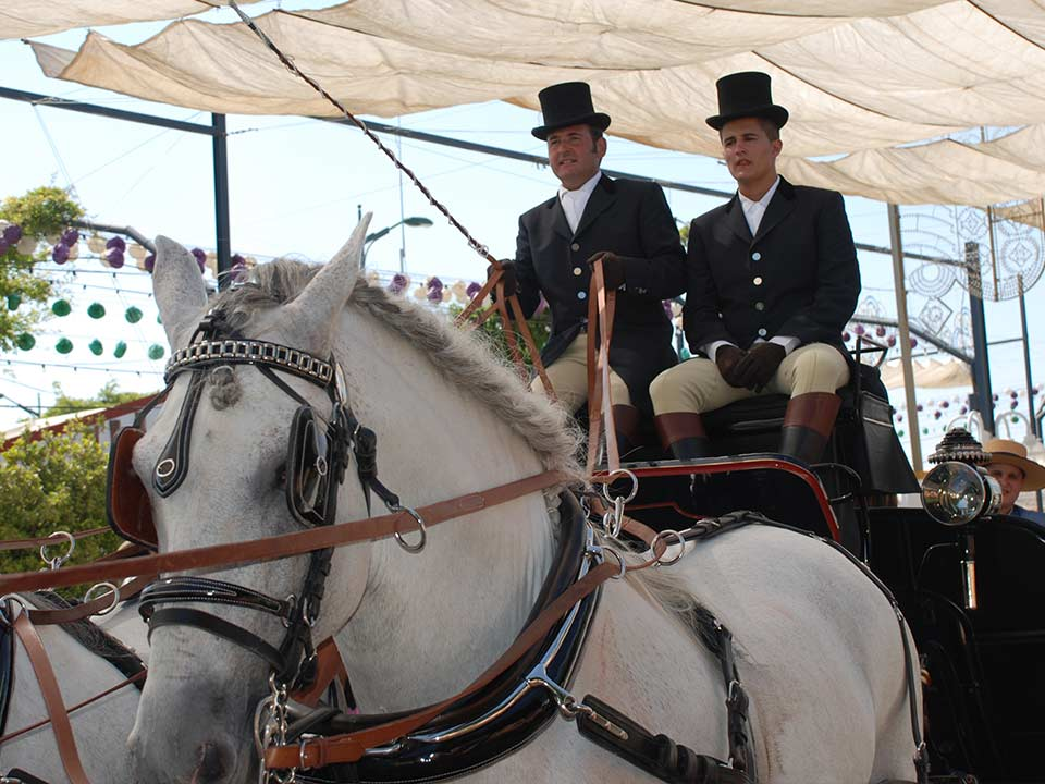 carruaje-caballos